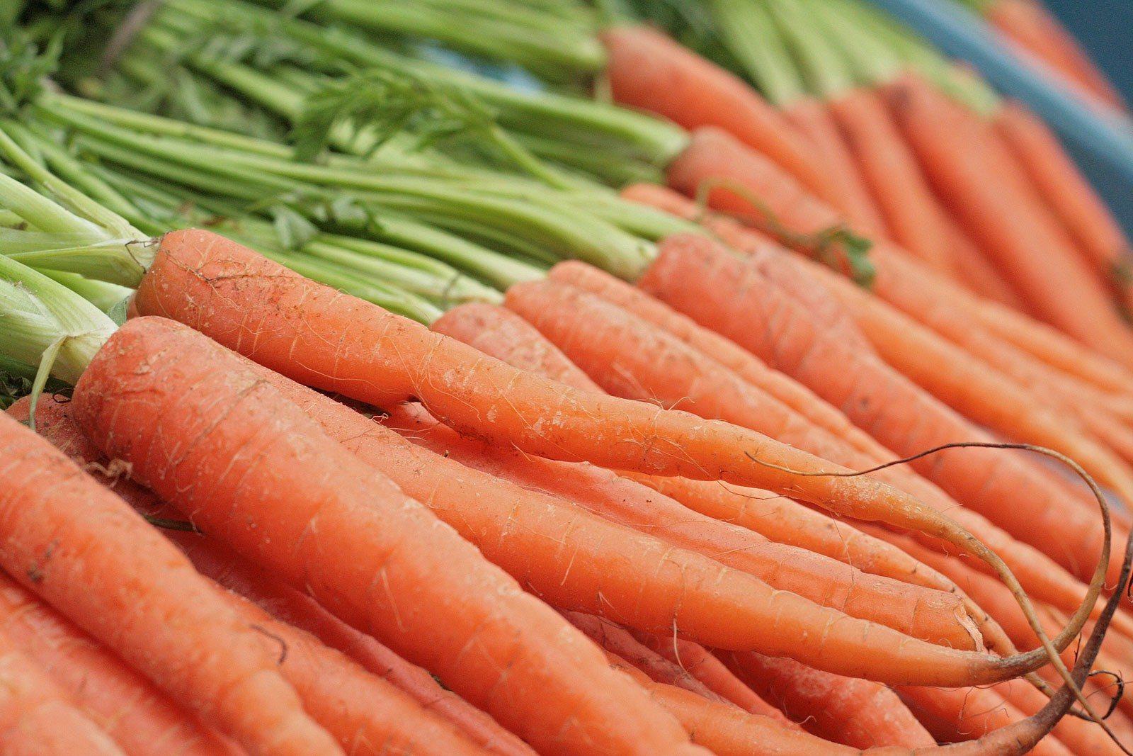 Risultati immagini per carote biologiche