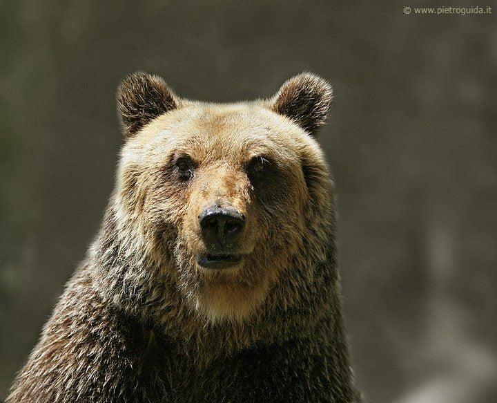 L 39 orso marsicano sandrino compie 30 anni grande festa a for Affittare una cabina grande orso
