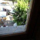 raid in comune a tagliacozzo, danni a vetrate e finestre (2)