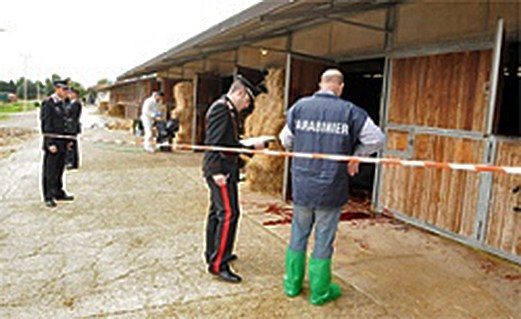 Box per cavalli di rom comprati con assegni falsi due for Box cavalli prefabbricati