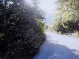 Strada di Tagliacozzo invasa dalla vegetazione (3)