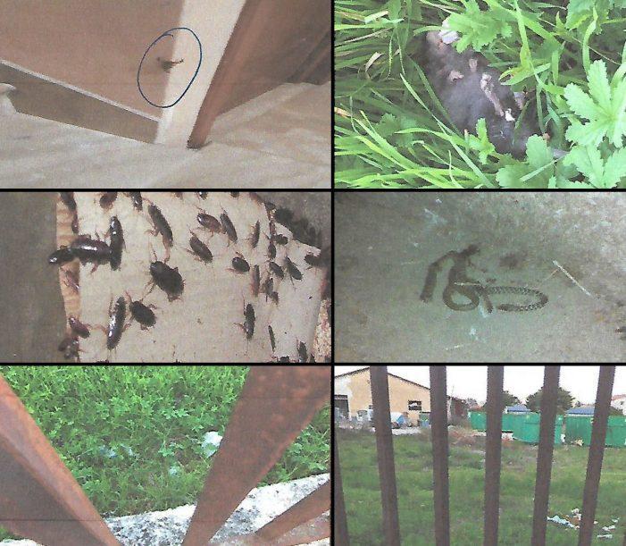 """Ratti, serpenti, rifiuti e adesso anche senzatetto. Continuano le lamentele dei cittadini di Luco sull'area """"ex ammasso"""""""