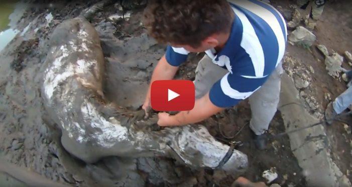 Lavori del Comune contro la siccità a Camporotondo, stop alla strage di bestiame nei laghi fangosi (video)