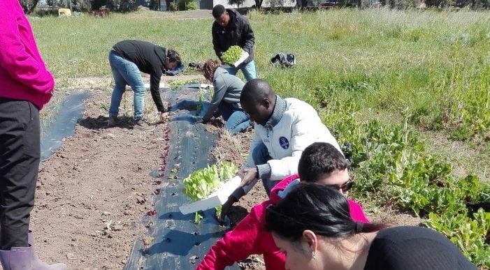 Festa del solstizio d'estate ad Avezzano con i migranti richiedenti asilo e progetto di agricoltura sociale