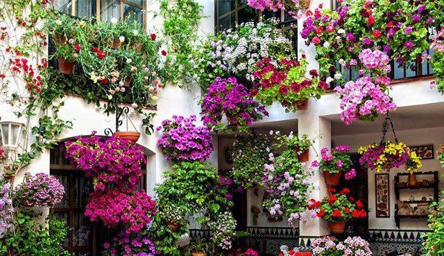 """""""Avezzano in fiore"""", nasce il concorso per chi abbellisce balconi, davanzali e vetrine"""